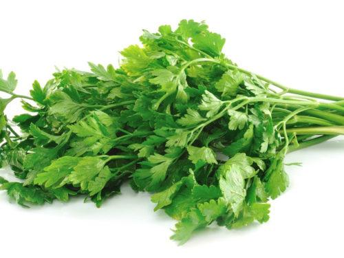 Fresh-Green-Vegetable-Image-H